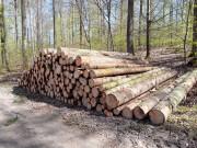 Käferholz im Wimpfener Forst (eigene Aufnahme)