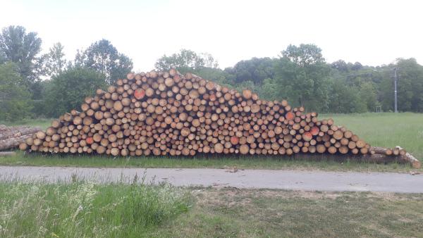 Fichten-Industrieholz im Trockenlager (Aufnahme Julia Meny)