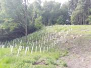 Wiederaufforstung im Kleinstprivatwald (eigene Aufnahme)