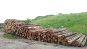 Ausgelagertes Fichten-Industrieholz (Aufnahme Ulrich Zobel)