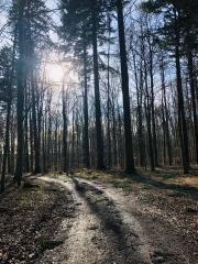 Wimpfener Forst im Winter