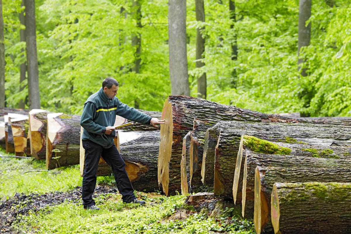 Holzernte Und Holzverkauf Landkreis Heilbronn